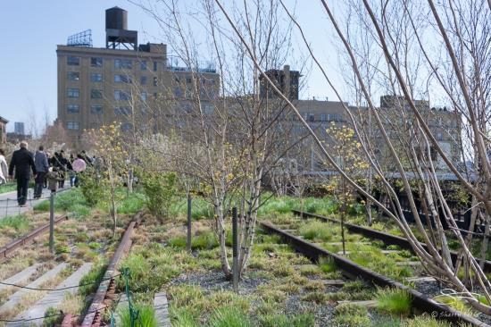 2011-04-17 High Line 10