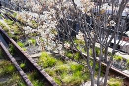 2011-04-17 High Line 15