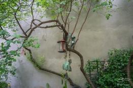 20110604 Dias Y Flores Garden 15