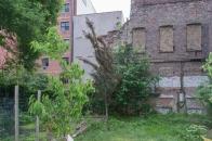 20110604 Peach Tree 2 St B-C 150