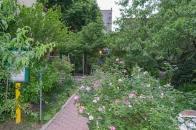 20110604 Peach Tree 2 St B-C 154