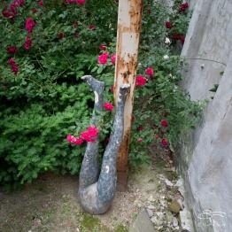 20110604 Suen Dragon Garden 24