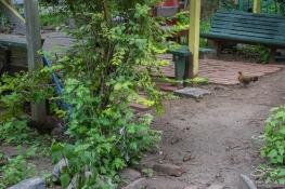 20110605 El Jardin Del Paraiso 93