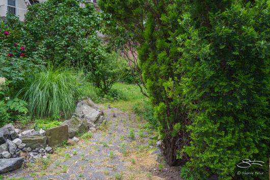20110605 Orchard Alley Gdn E 4 C-D 97