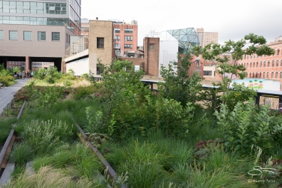 2011-06-14 High Line 08