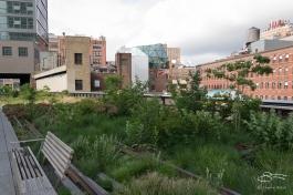 2011-06-14 High Line 09