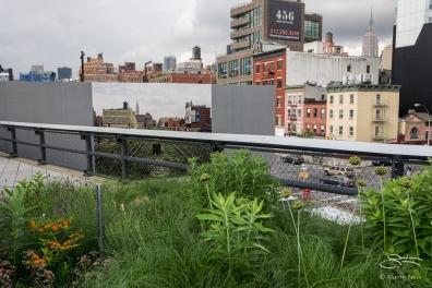 2011-06-14 High Line 32
