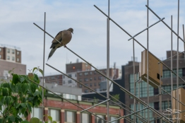 2011-06-14 High Line 75