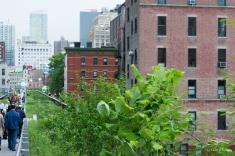 2011-06-14 High Line 95