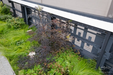 2011-06-14 High Line 105