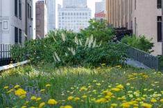 2011-07-09 High Line 47