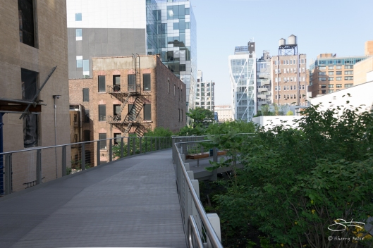 2011-07-09 High Line 48