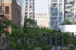 2011-07-09 High Line 49