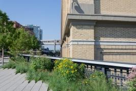 2011-07-09 High Line 61