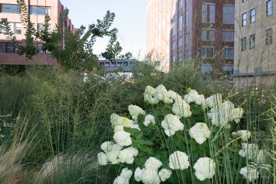 2011-07-30 High Line 19