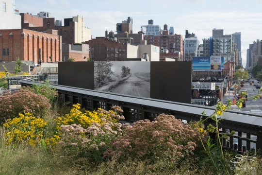 2011-08-04 High Line 10