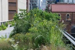 2011-08-04 High Line 15