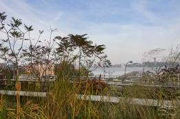 2011-11-03 High Line