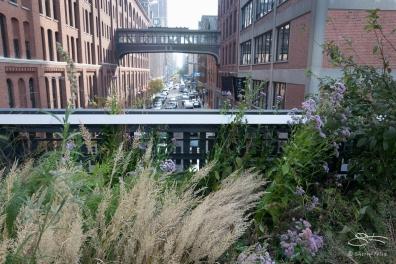2011-11-03 High Line 29