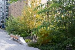 2011-11-03 High Line 53