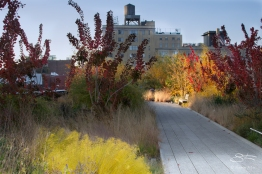 2011-11-11 High Line