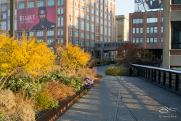 2011-11-11 High Line 11