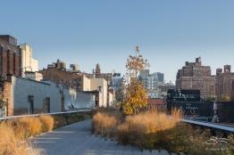 2011-11-11 High Line 23
