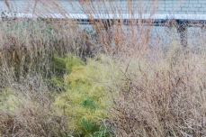 2011-11-11 High Line 29