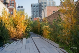 2011-11-11 High Line 38