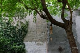 20120728 Alberts Garden 16