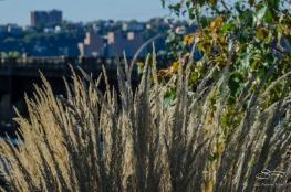 2012-10-16 High Line 01