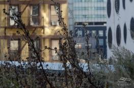 2012-10-16 High Line 02