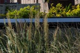 2012-10-16 High Line 05
