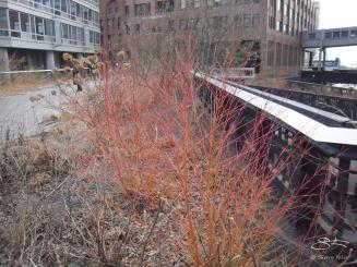 2012-12-30 High Line 21