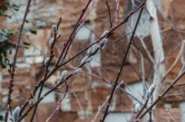 2013-02-25 High Line 26