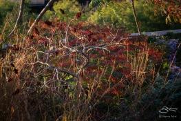 2013-10-26 High Line 11