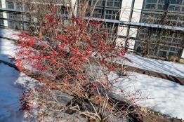 2015-03-09 High Line 20
