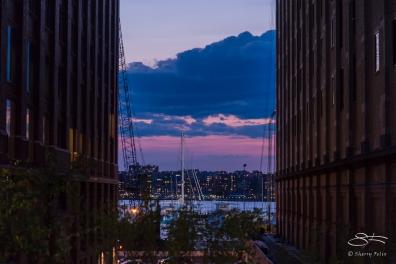 2016-05-08 High Line 37