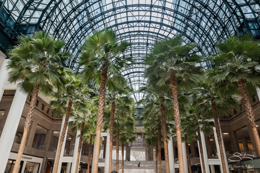 winter garden nyc 642016 - Winter Garden Nyc