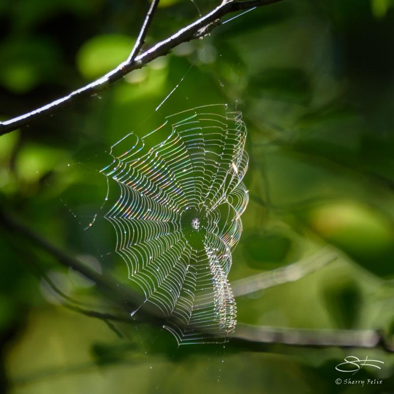 Web, Central Park 9/12/2016