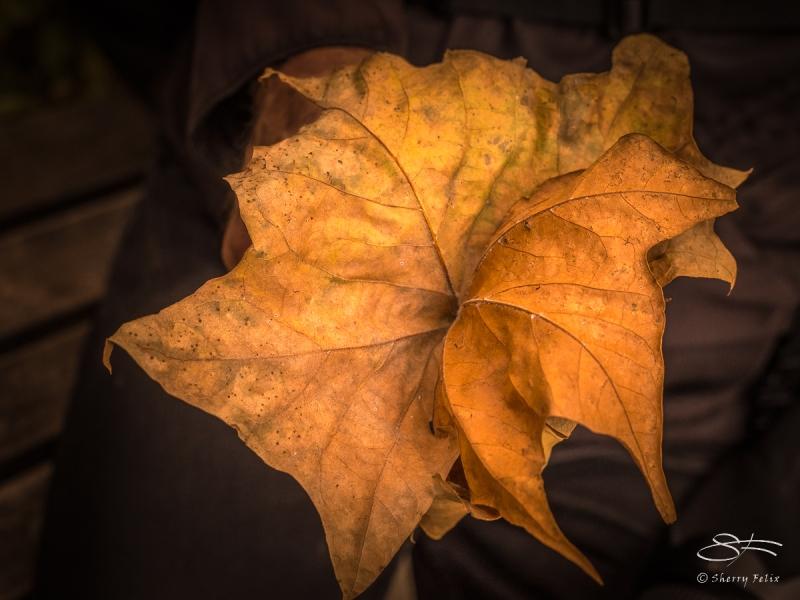Leaves 11/6/2016