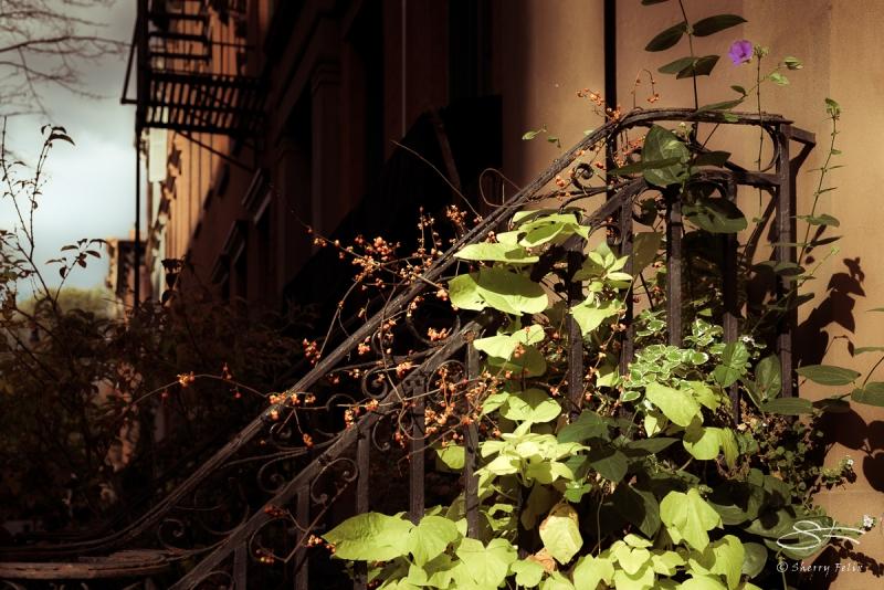 Plants on a railing 11/6/2016