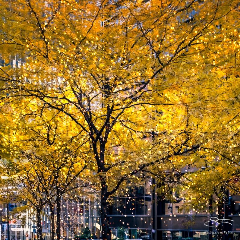 Tree Lights, Liberty Plaza NYC 11/17/2016