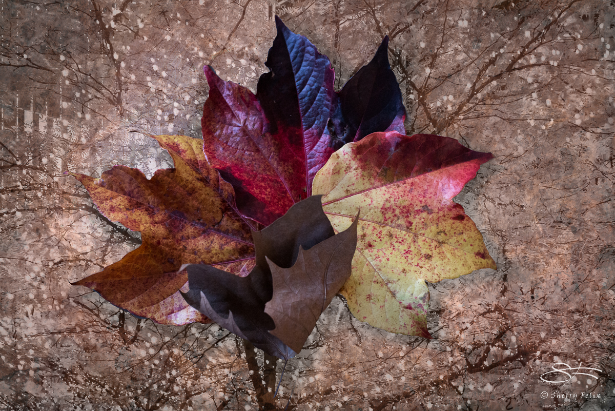 Fall Leaves, NYC 11/19/2016