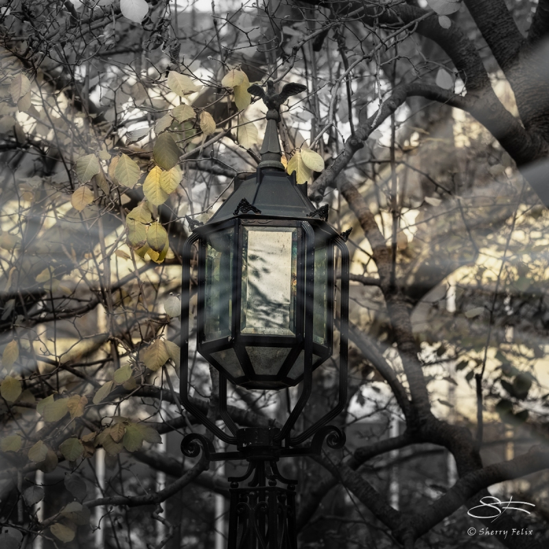 Lamp at City Hall Park NYC 11/26/2016