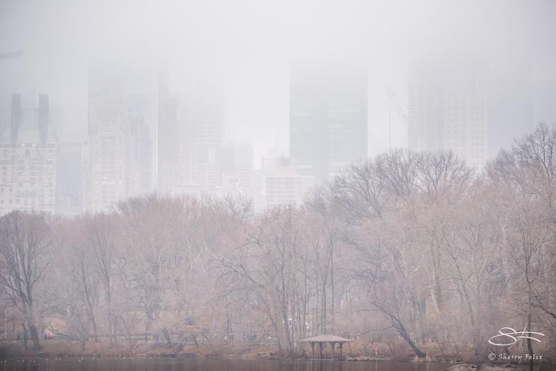 Fog, Central Park 1/22/2017