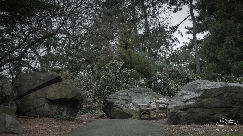 The Lake E, Central Park 1/22/2017