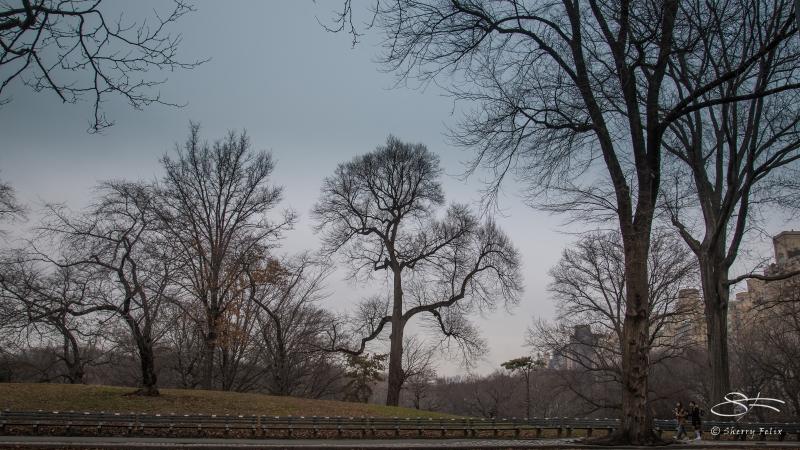 Terrace Drive, Central Park 1/22/2017