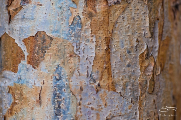 Bark, High Lline 2/19/2017