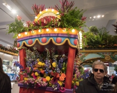 Marc at Macy's Flower Show, NYC 4/2/2017